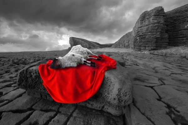 sacrificial-lamb