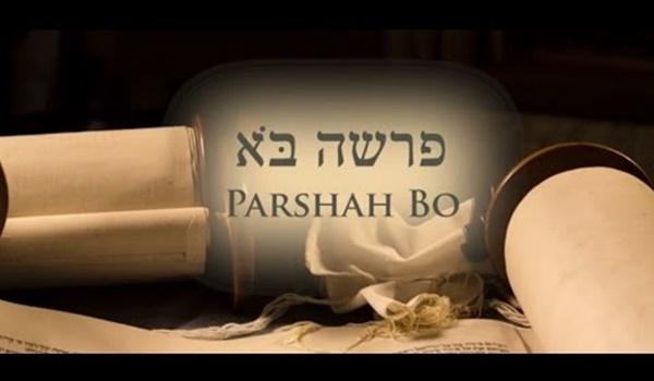 Torah Portion Bo