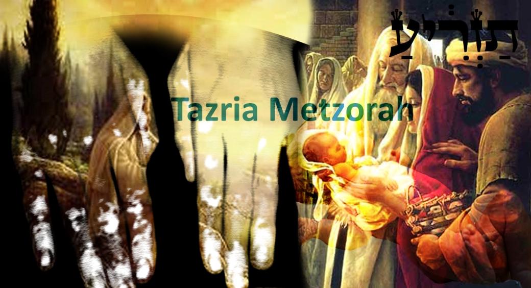 Tazria-Metzorah.jpg
